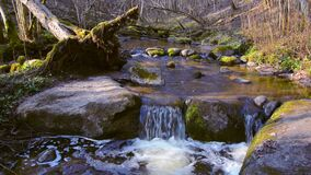 Nature forest, flowing running stream water in spring season