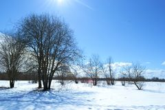Nature. Forest glade sun tree bushes trail snow Stock Photo