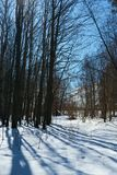 Nature. Forest glade sun tree bushes trail snow shadow Stock Photos
