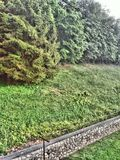 nature, forest, grass, greenery, landscape, stone wall, rain royalty free stock image