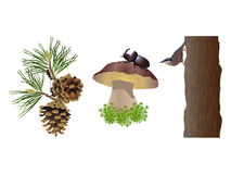 Nature of forest Stock Image