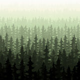 Nature forest landscape pine fir. Nature forest pine trees Stock Photos