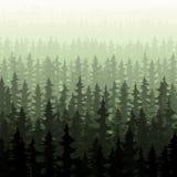 Nature forest landscape pine fir Stock Photos