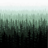 Nature forest landscape pine fir Royalty Free Stock Photos