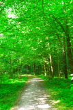 Nature. forest in summer Stock Image