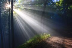 Nature, Forest, Sunlight, Woodland