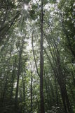 Nature forest trees photo Bodensee germany Stock Photo