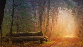 Nature, Forest, Woodland, Ecosystem Stock Image