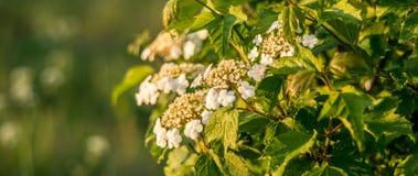 Nature fraîche de ressort dans la vue de panorama de fleur photos libres de droits