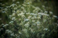 Nature fraîche de ressort en fleur photographie stock libre de droits