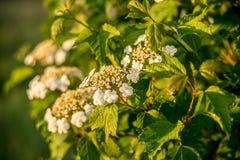 Nature fraîche de ressort en fleur photos libres de droits