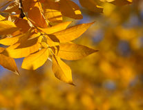 Nature frame. Orange autumn leaves in the sun rays Royalty Free Stock Image