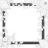 Nature frame. Black and white branches, leaves, flower. Royalty Free Stock Photography