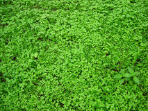 Nature Fresh. Green Monsoon Foliage Colors Stock Images
