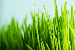 nature fresh green grass with dews drop Stock Photos