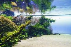 Planted aquarium. Nature freshwater aquarium in Takasi Amano style of Lisbon, Portugal, Europe Photo taken on: February 17, 2016 royalty free stock photography