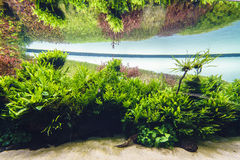 Nature freshwater aquarium in Takasi Amano style. Very high resolution, 42.2 megapixels. Nature freshwater aquarium in Takasi Amano style of Lisbon, Portugal stock photography