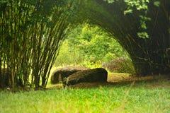 Nature Garden. Piture of Green Bamboo Garden taken at Putrajaya wetland, Malaysia Stock Photography