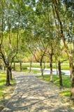Nature garden Stock Image