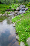 Nature garden with cascade small waterfall Royalty Free Stock Photo