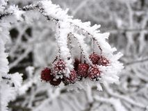 Nature gelée Image libre de droits