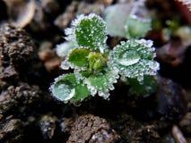 Nature gelée Photographie stock