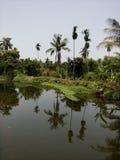 Nature gentille Images libres de droits