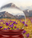 Nature in the glass ball. Crocus on background of mountains Stock Images