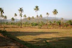 Nature of Goa Stock Image