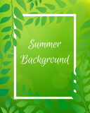 Nature gradient backdrop with foliage and rectangular frame. Gre Royalty Free Stock Images