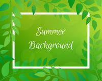 Nature gradient backdrop with foliage and rectangular frame. Royalty Free Stock Photography