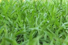 Nature grass background. Closeup of natural grass background Stock Photos