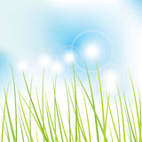 Nature - grass Royalty Free Stock Photo