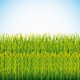 Nature grass field background. Vector illustration design royalty free illustration