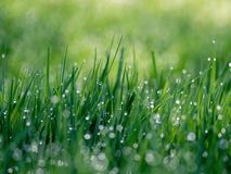 Nature, Grass, Green, Water, Drops Stock Photography