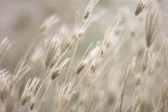 Nature grass. Many Grass with the wind Royalty Free Stock Images