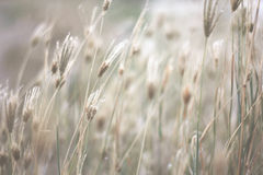 Nature grass. Many Grass with the wind Stock Photos