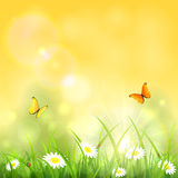 Nature with grass and shinning sun Stock Photography