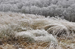 Nature grass texture structure Stock Image