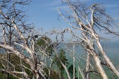 Nature grave Images libres de droits