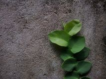 Nature green abstrack background texture