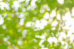 Nature green abstract bokeh background Royalty Free Stock Photography