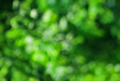 Nature green background Stock Image