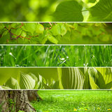 Nature green background Stock Photos