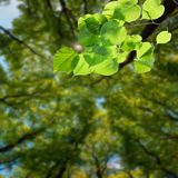Nature green background 03 Royalty Free Stock Photos