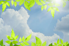 Nature green background with over blue sky. For design Royalty Free Stock Photos