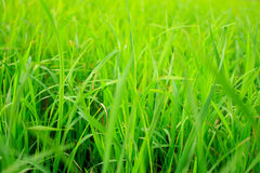 Nature green background Royalty Free Stock Image