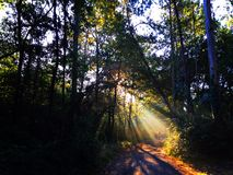 Sun rays in nature forest, Camino de Santiago. Stock Photography