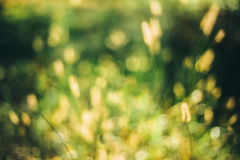 Nature Green Blurred Background Of Out Of Focus Grass Or Bokeh, Royalty Free Stock Photo