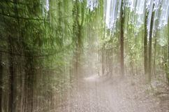 Nature Green Blurred Background. Blurred shot of a forest for background texture Stock Images